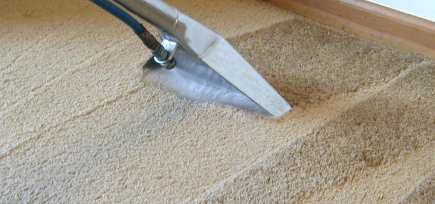 Taylor Steamer, LLC Carpet Cleaning
