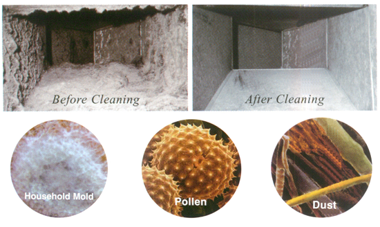 how to clean mold or mildew from siphon hose